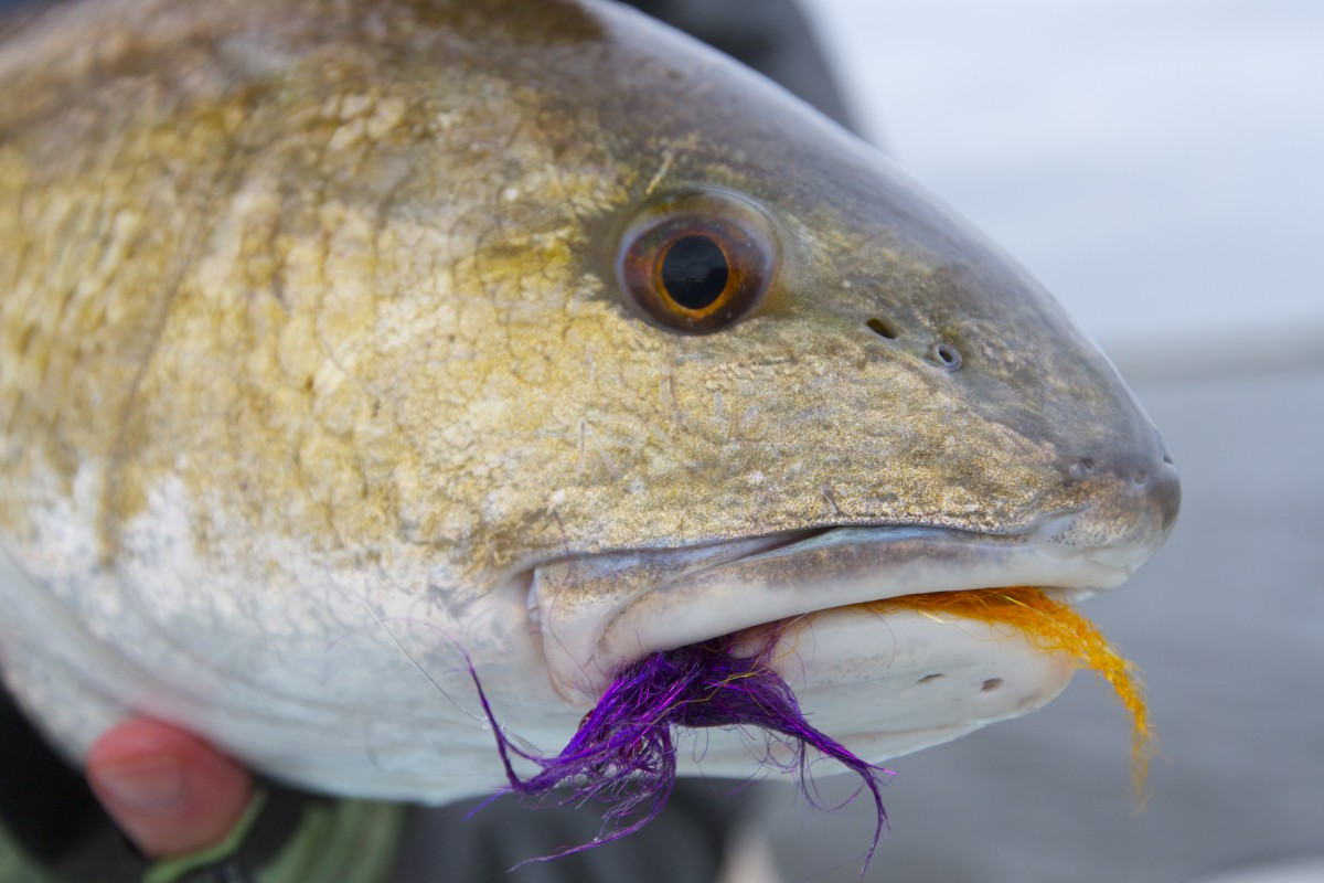 New orleans fly fishing for Louisiana redfish fly fishing