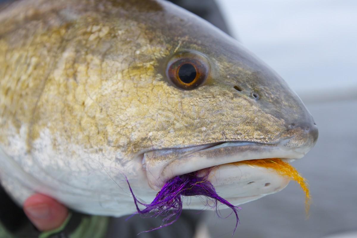 Fly Fishing Reports Florida Tarpon And Louisiana Redfish
