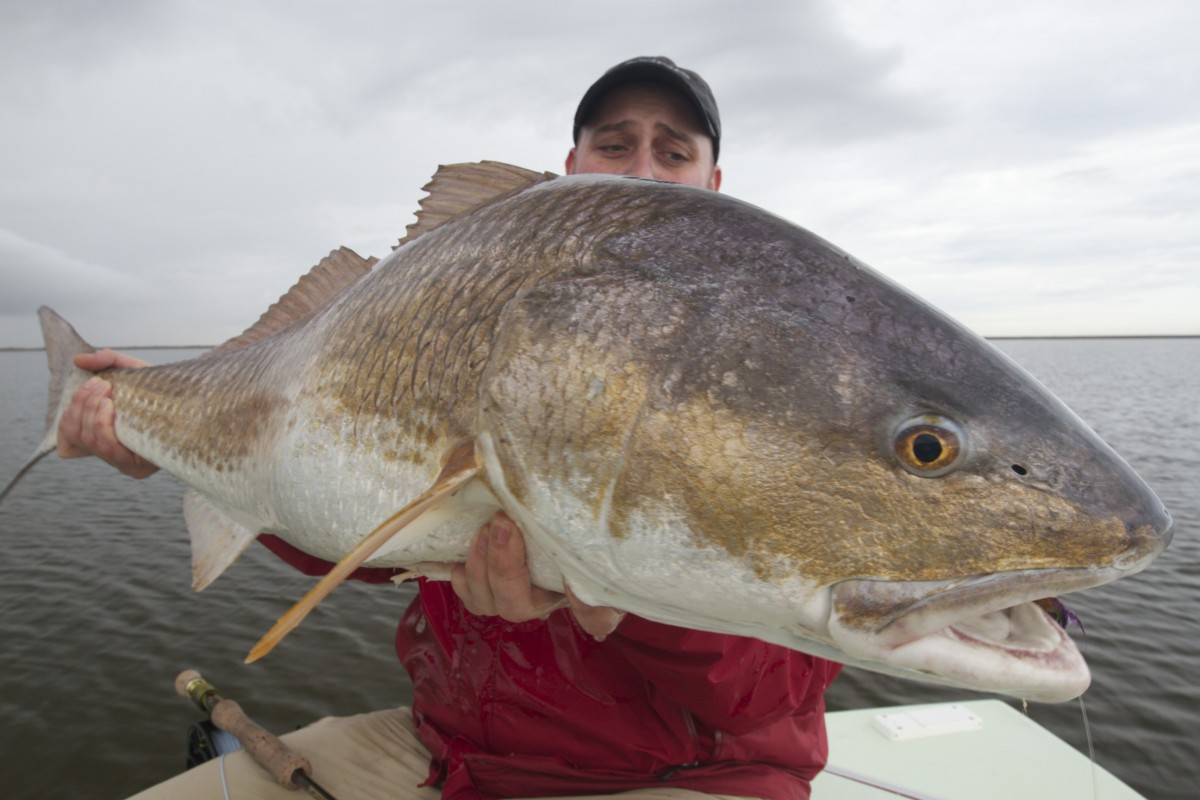 Fly fishing for hopedale la redfish for Louisiana redfish fly fishing