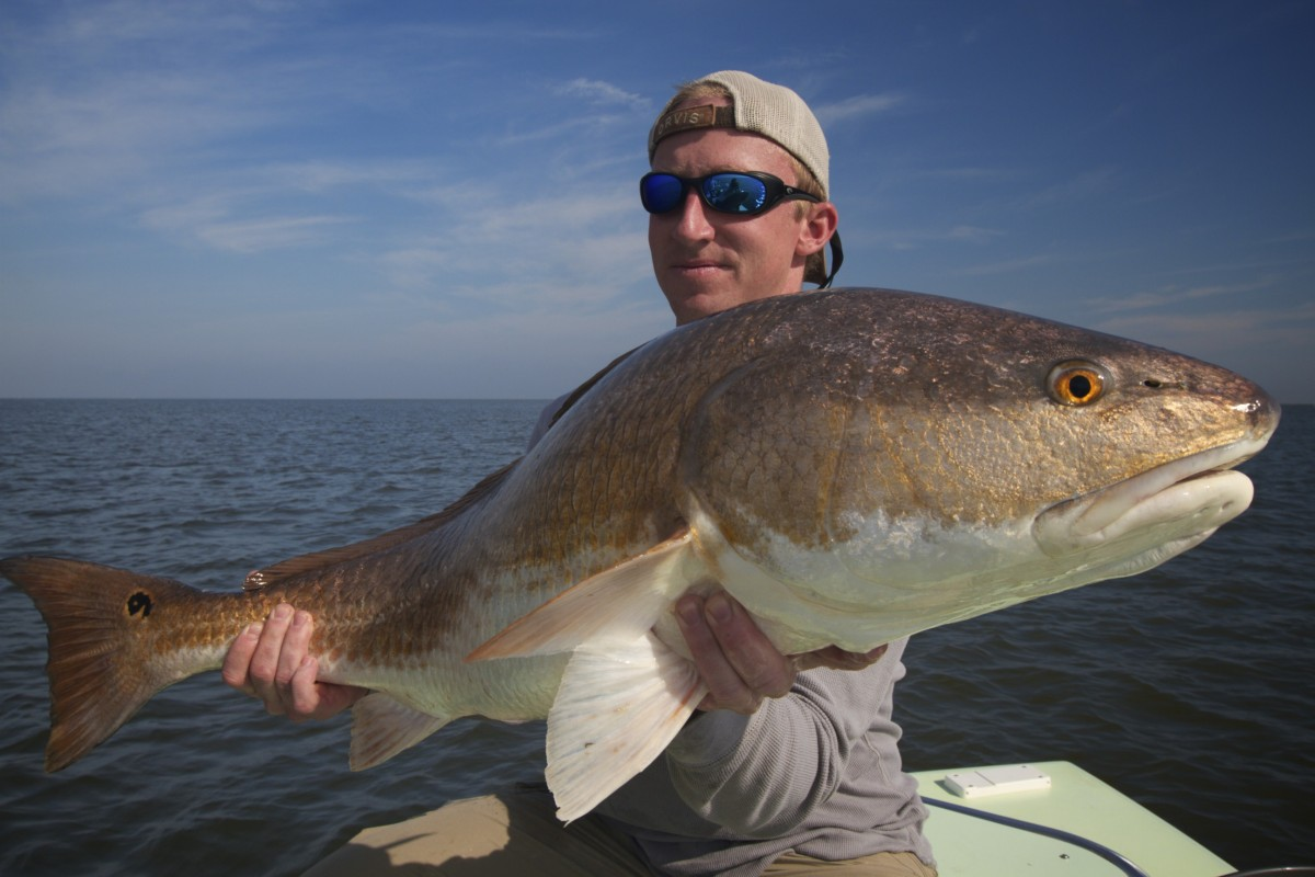 Fly fishing lousiana bull redfish for Fly fishing new orleans