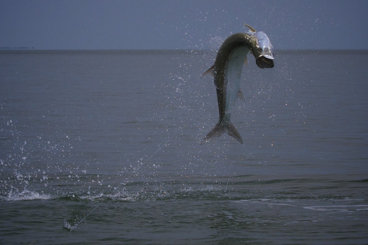 Fly fishing for tarpon and the florida panhandle for Apalachicola fishing report