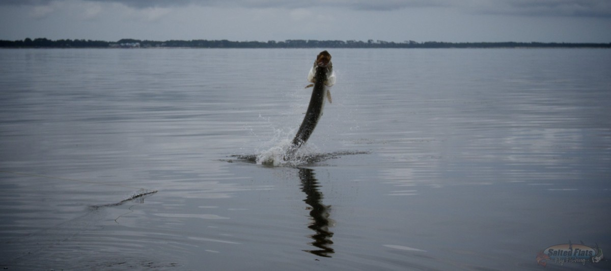 Florida panhandle fly fishing charters for Florida tarpon fishing