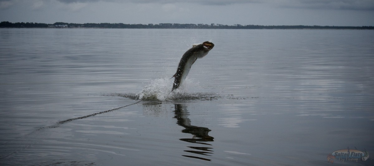 Florida panhandle fly fishing charters for Florida fishing trips
