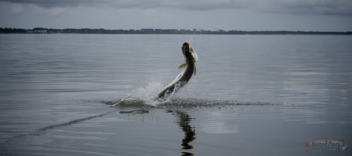 Florida panhandle fly fishing charters for Fly fishing florida