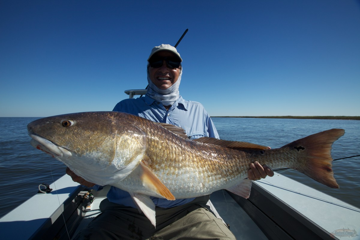 Louisiana 39 s bull redfish for Louisiana redfish fly fishing