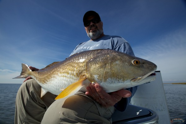 Bull Redfish caught Fly Fishing out of New Orleans, La.