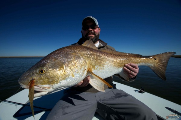 Louisiana saltwater fly fishing guide for Louisiana redfish fly fishing
