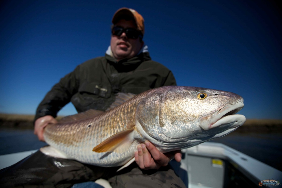 Saltwater fly fishing lousiana redfish for Fly fishing redfish