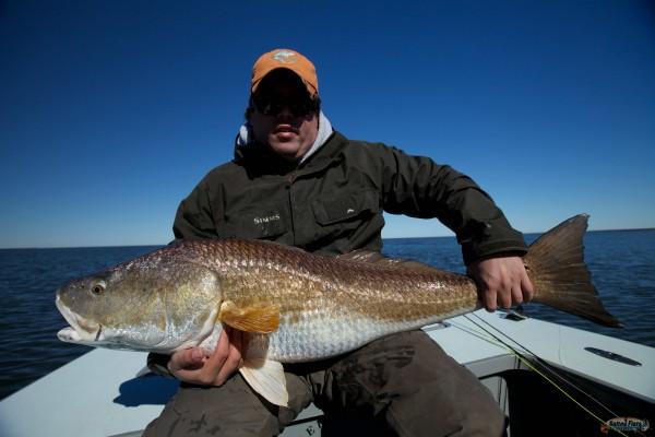 32 pound Redfish from Louisiana