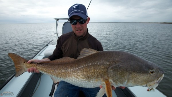 Bull Redfish in Louisiana