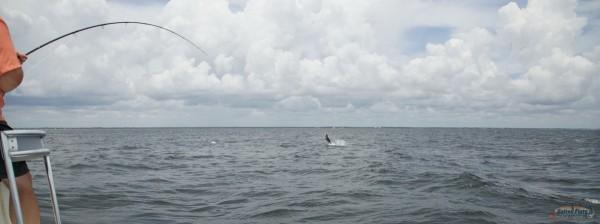 Florida Panhandle Fly fishing Tarpon