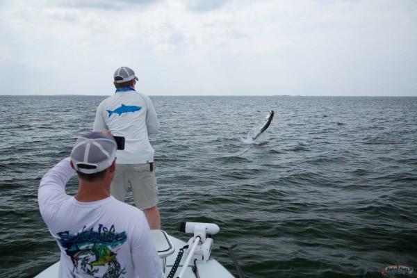 Jumping Tarpon in North Florida