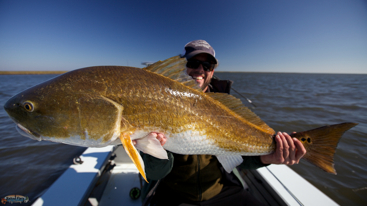 Fly fishing new orleans redfish in october for Fly fishing redfish