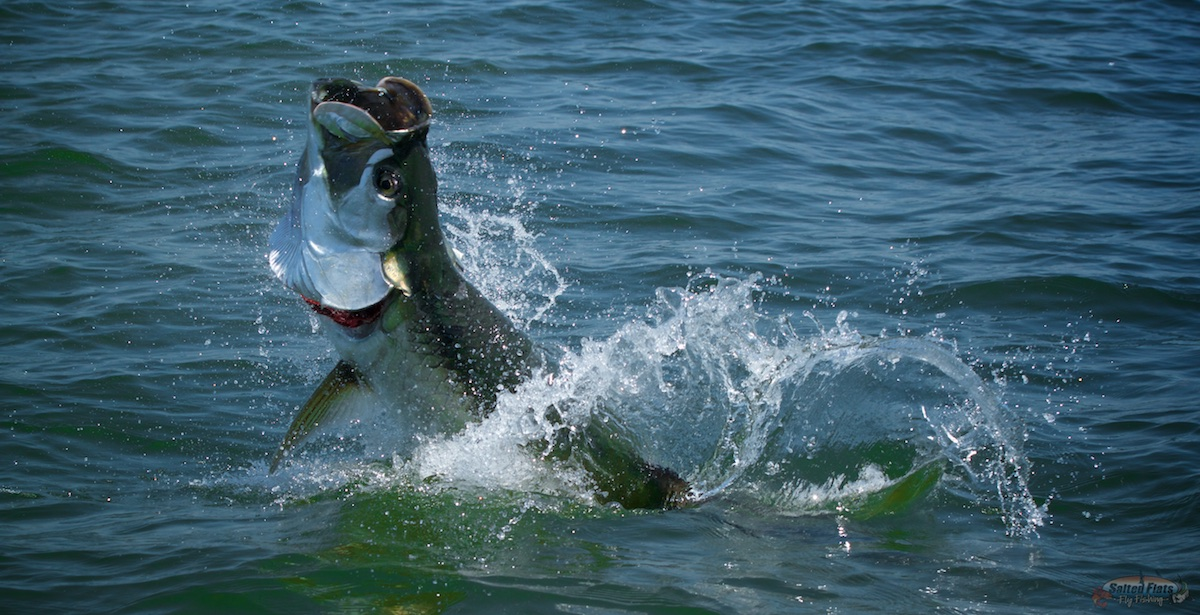 Florida panhandle fly fishing for Fly fishing for tarpon