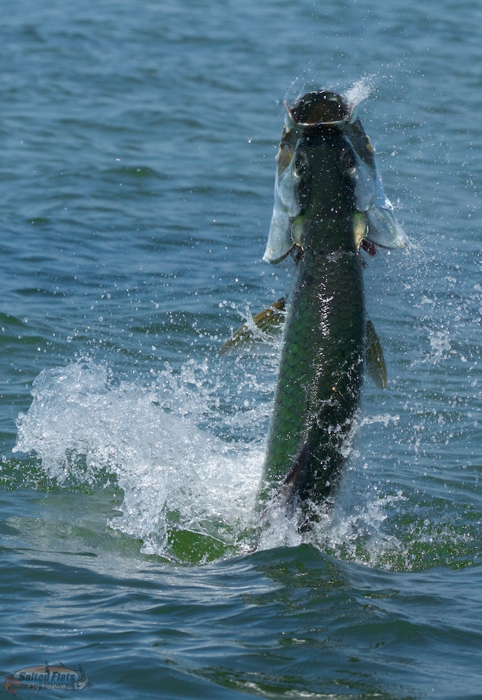 Florida panhandle fly fishing for Florida tarpon fishing