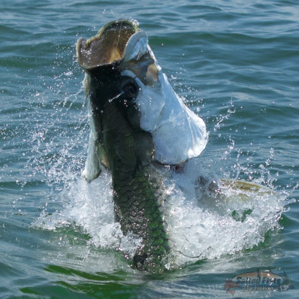 Florida Panhandle Fly Fishing Guide