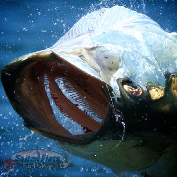 Florida Panhandle Fly Fishing Tarpon Guide