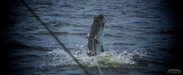 Tarpon Fly Fishing in Apalachicola