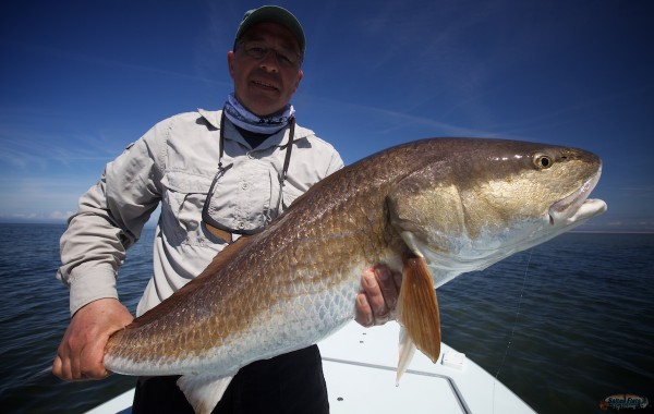 Louisiana Marsh Redfish on Fly