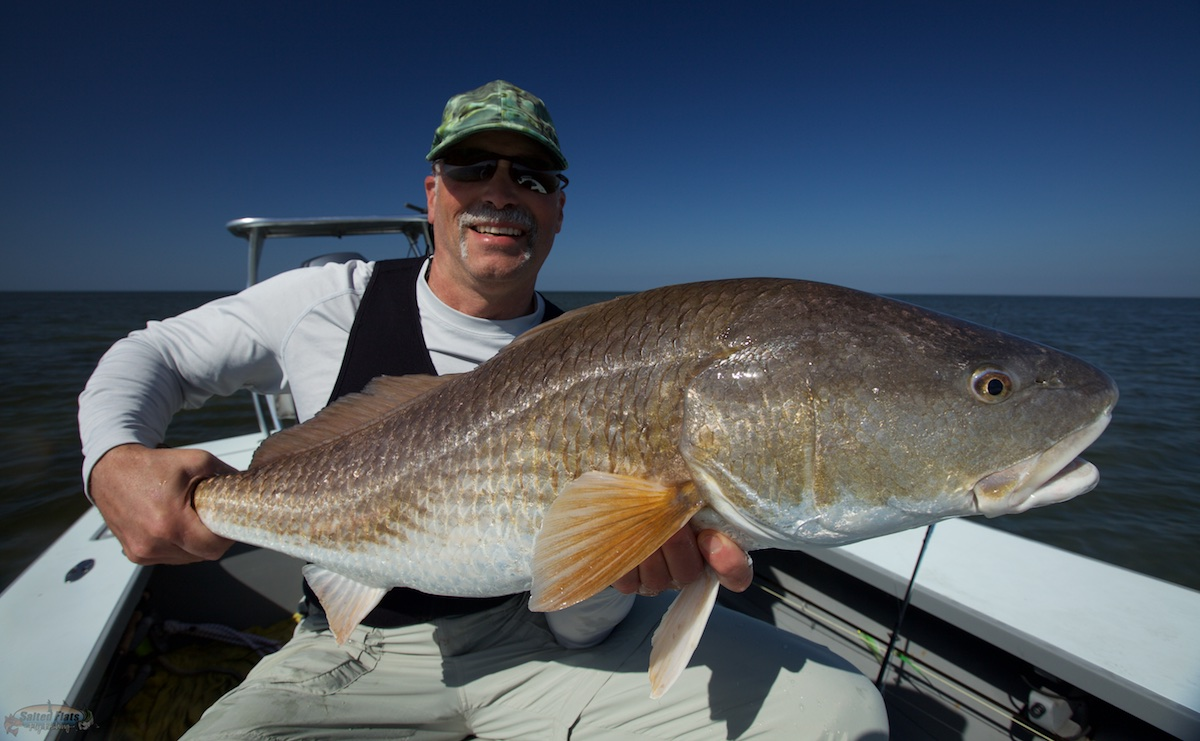 Louisiana redfish guide archives salted flats fly fishing for Fly fishing redfish
