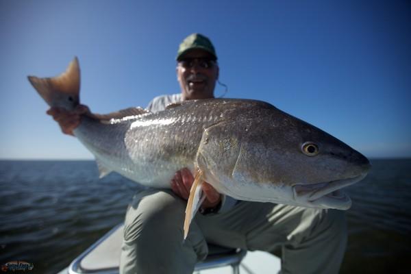Bull Redfish from Louisiana