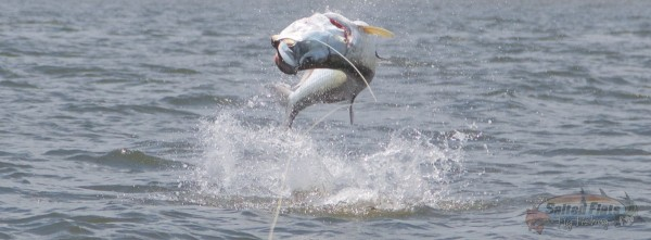 July Fly Fishing for Tarpon in Apalachicola