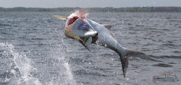 July Panhandle Fly Fishing Tarpon