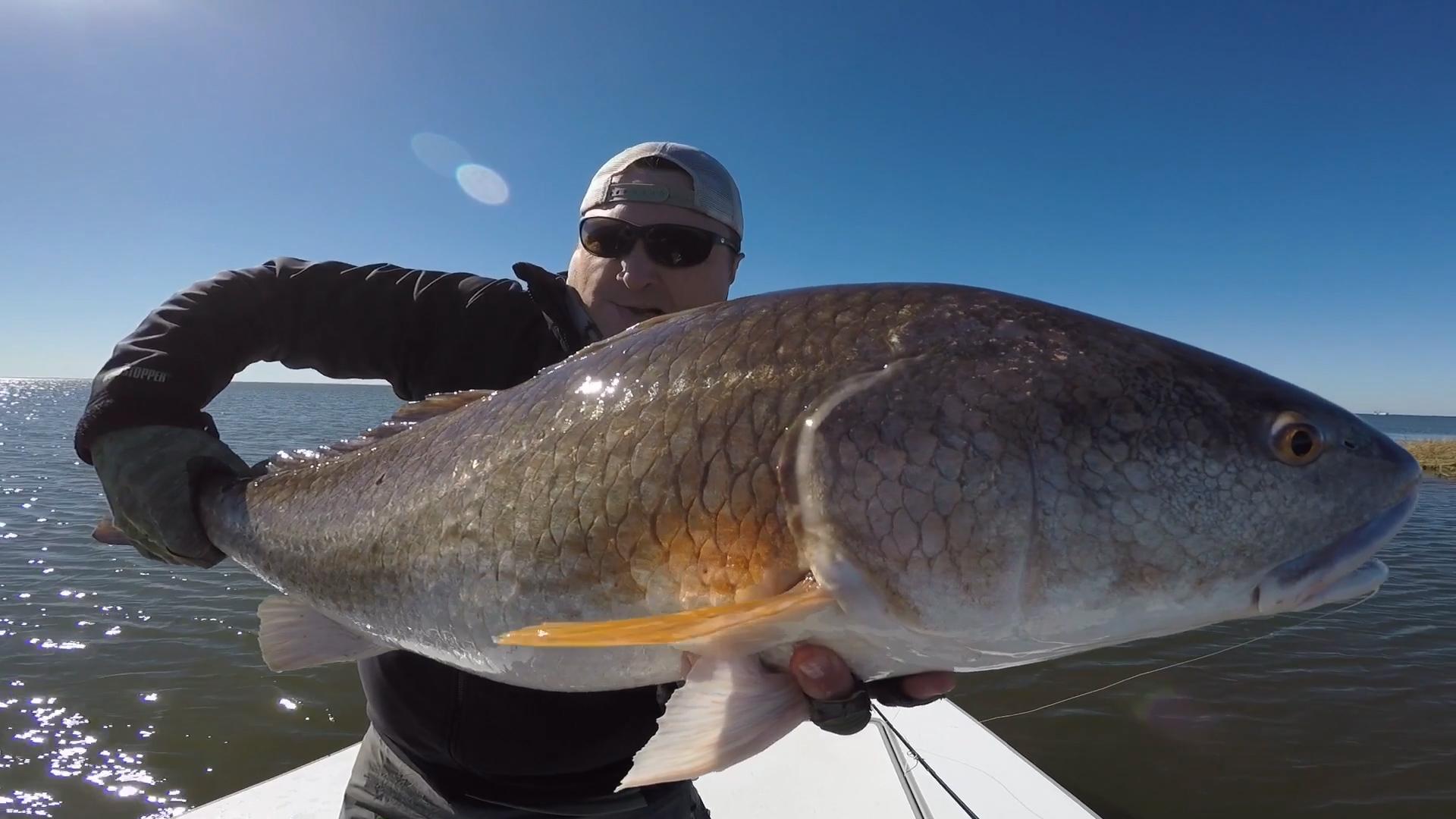 Louisiana Redfish Fly Fishing Guide