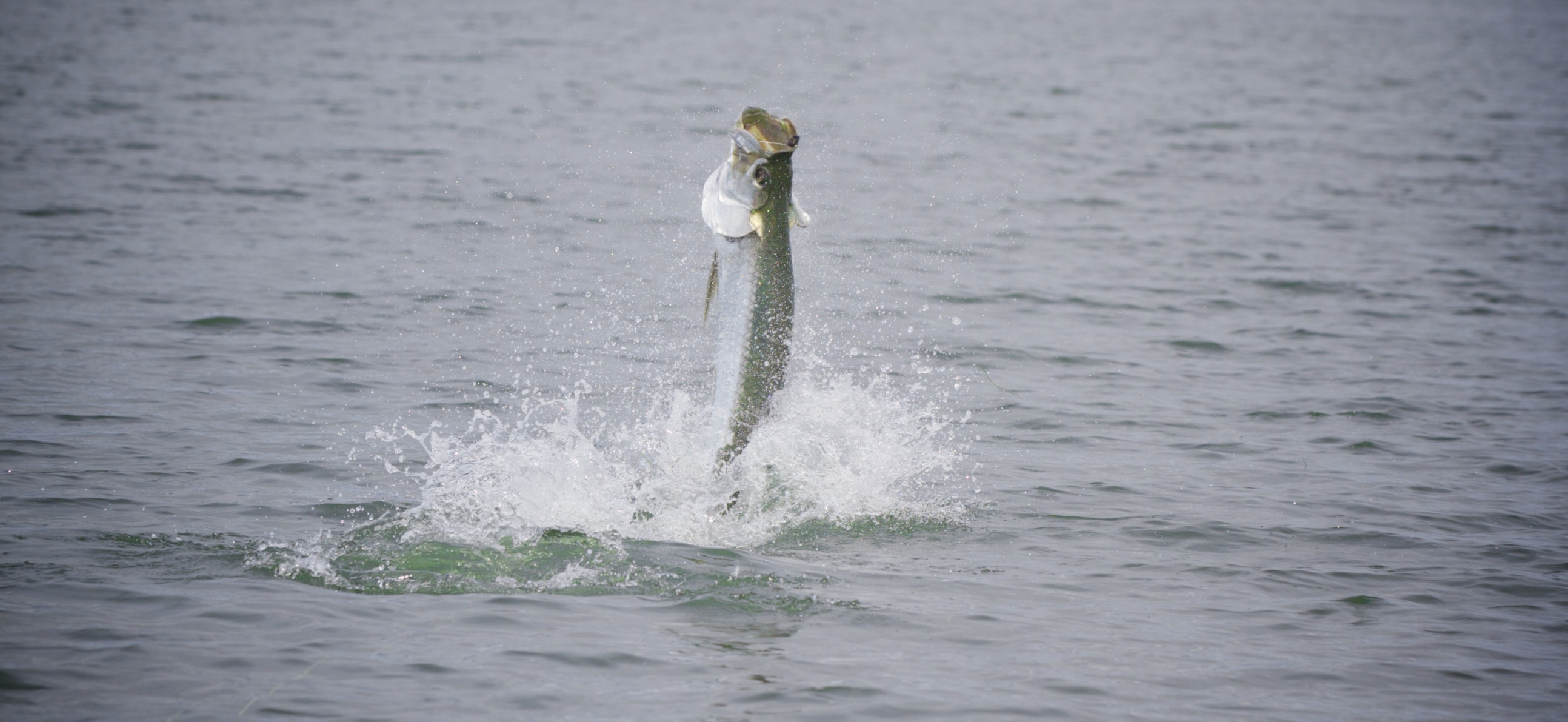 Florida Panhandle Tarpon season