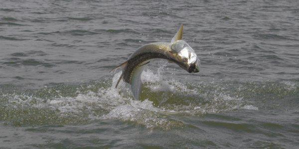 September Fly Fishing Florida Panhandle